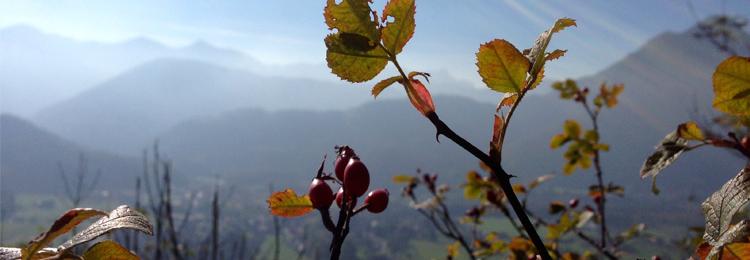 Hagbutte-Herbst